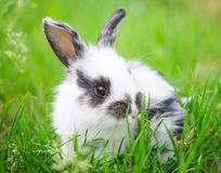 Kleines Kaninchen stockbilder