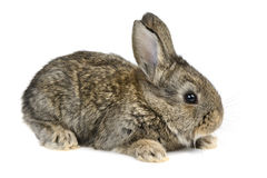 Kleines Kaninchen Stockfotografie