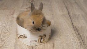 Kleines Kaninchen auf hölzernem Hintergrund Lizenzfreie Stockfotos