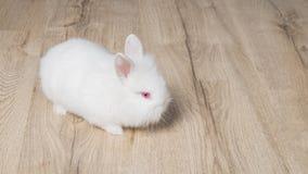 Kleines Kaninchen auf hölzernem Hintergrund Lizenzfreie Stockbilder