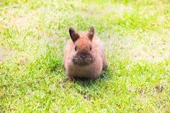Kleines Kaninchen, das auf Gras sitzt Stockbild