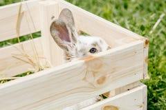 Kleines Kaninchen im Kasten Stockfoto