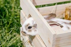 Kleines Kaninchen im Kasten Lizenzfreies Stockbild