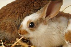 Kleines Kaninchen isst Lizenzfreies Stockbild