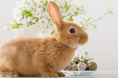 Kleines Kaninchen mit Frühlingsblumen Stockfoto