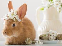Kleines Kaninchen mit Frühlingsblumen Stockbild