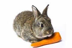 Kleines Kaninchen mit Karotte Lizenzfreies Stockfoto