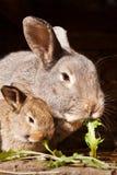 Kleines Kaninchen mit Mama Lizenzfreie Stockfotos