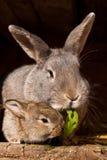 Kleines Kaninchen mit Mama Stockfotografie