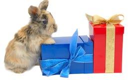 Kleines Kaninchen nahe den Kästen mit Geschenken Stockbilder