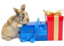 Kleines Kaninchen nahe den Kästen mit Geschenken Stockfotos