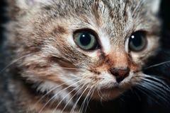 Kleines Katzenporträt stockfotos