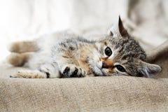 Kleines Katzenporträt lizenzfreie stockfotografie