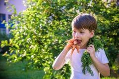 Kleines Kind, das frische geerntete reife Karotten im Garten auf dem pflanzenden Bett am Sommertag isst stockbild