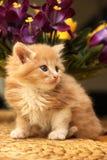 Kleines Kätzchen mit violetten Blumen Lizenzfreie Stockbilder