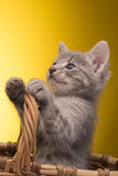 Kleines lustiges Kätzchen Lizenzfreies Stockfoto