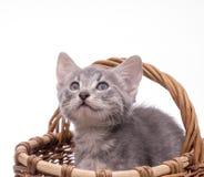 Kleines lustiges Kätzchen Stockfotos