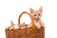 Kleines lustiges Kätzchen Lizenzfreie Stockfotos