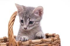 Kleines lustiges Kätzchen Stockfotografie