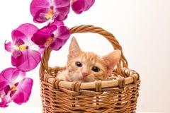 Kleines lustiges Kätzchen Lizenzfreie Stockbilder