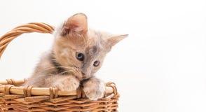 Kleines lustiges Kätzchen Stockbilder