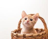 Kleines lustiges Kätzchen Stockbild