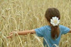 Kleines Mädchen auf dem Weizengebiet Stockfotos