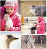 Kleines Mädchen auf einem Bauernhof mit Tieren stockbilder