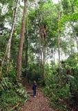 Kleines Mädchen auf Natur-Trekkingwanderung im Wald Stockfoto