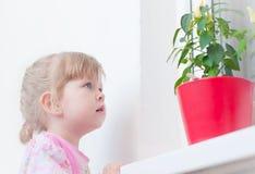 Kleines Mädchen betrachtet eine Blume Lizenzfreies Stockfoto