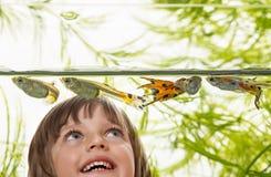 Kleines Mädchen, das Aquariumfische betrachtet Stockbild