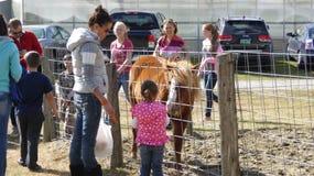 Kleines Mädchen, das dem Pony eine Karotte einzieht stockbild