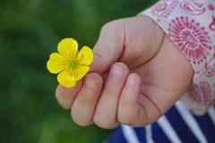 Kleines Mädchen, das eine Butterblume in ihrer Hand hält stockbilder