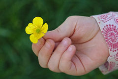 Kleines Mädchen, das eine Butterblume in ihrer Hand hält stockbild