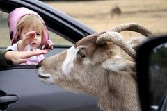 Kleines Mädchen, das eine Ziege in einem Park der wild lebenden Tiere streichelt Lizenzfreies Stockbild