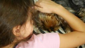 Kleines Mädchen, das einen Hund-Yorkshire-Terrier liegt auf dem Bettfreundschaftshaustier streichelt stock video footage