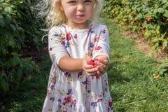 Kleines Mädchen, das frisch ausgewählte Himbeeren hält Stockfotos
