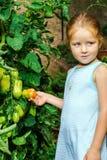 Kleines Mädchen, das ihrer Mutter mit Tomate im Garten hilft Lizenzfreies Stockfoto