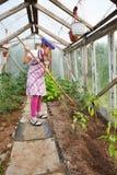 Kleines Mädchen, das im Gewächshaus im Garten arbeitet Stockfotos