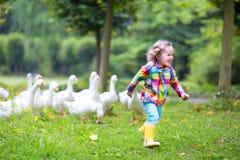 Kleines Mädchen, das mit Gänsen spielt Stockfotos