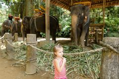 Kleines Mädchen, das nahe den gezähmten und gebundenen Elefanten steht lizenzfreie stockfotos