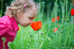 Kleines Mädchen, das rote Mohnblumen schnüffelt Stockfotos
