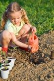 Kleines Mädchen, das Tomatesämlinge pflanzt stockfotos