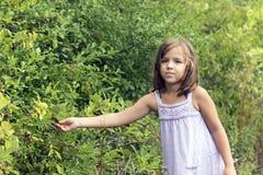 Kleines Mädchen, das wilde Beeren auswählt Stockfotografie