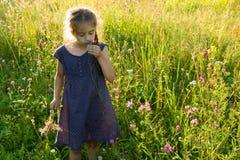 Kleines Mädchen, das wilde Blume auf Sommerwiese riecht Stockfotos