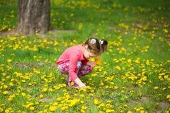 Kleines Mädchen der Schönheit mit dem gelben Löwenzahn, der draußen auf spr spielt Stockbilder
