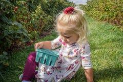 Kleines Mädchen in einem Himbeerflecken, der einen Quartkorb von raspb hält Lizenzfreie Stockbilder