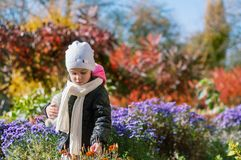 Kleines Mädchen geht in den bunten Garten des Herbstes Stockbild