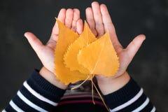 Kleines Mädchen hält Herbstlaub in den Händen lizenzfreies stockbild
