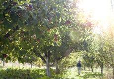 Kleines Mädchen im Apfelgarten Lizenzfreies Stockfoto